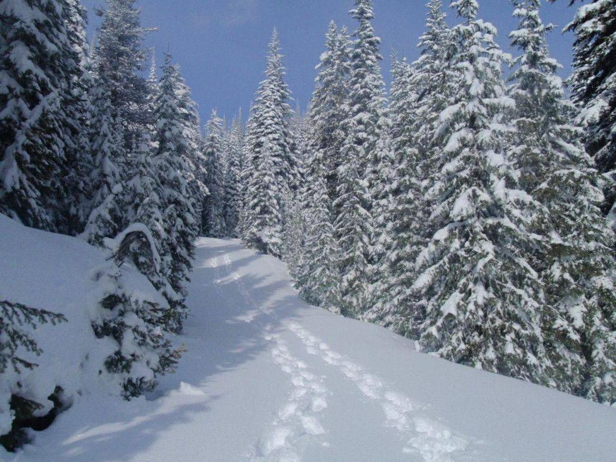 Schneeschuhwandern.jpg.1024x0.jpg