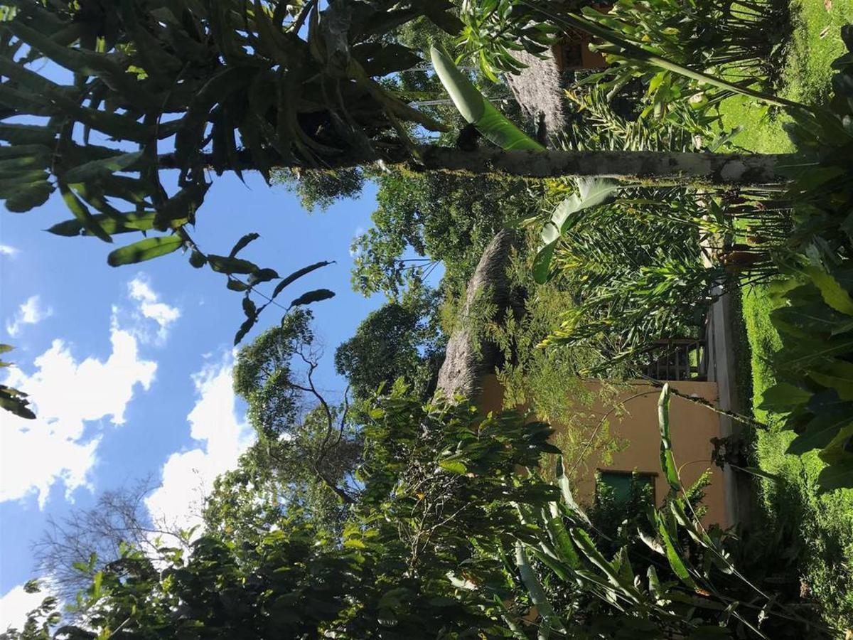 family-room-jungle-lodge.JPG