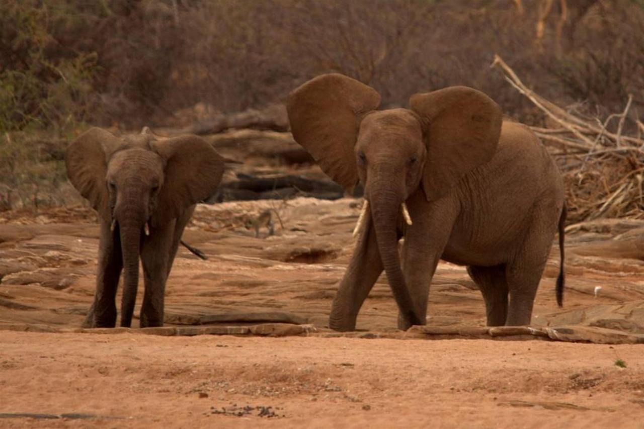 Elephants at the waterhole by Tarn Breedveld.jpg