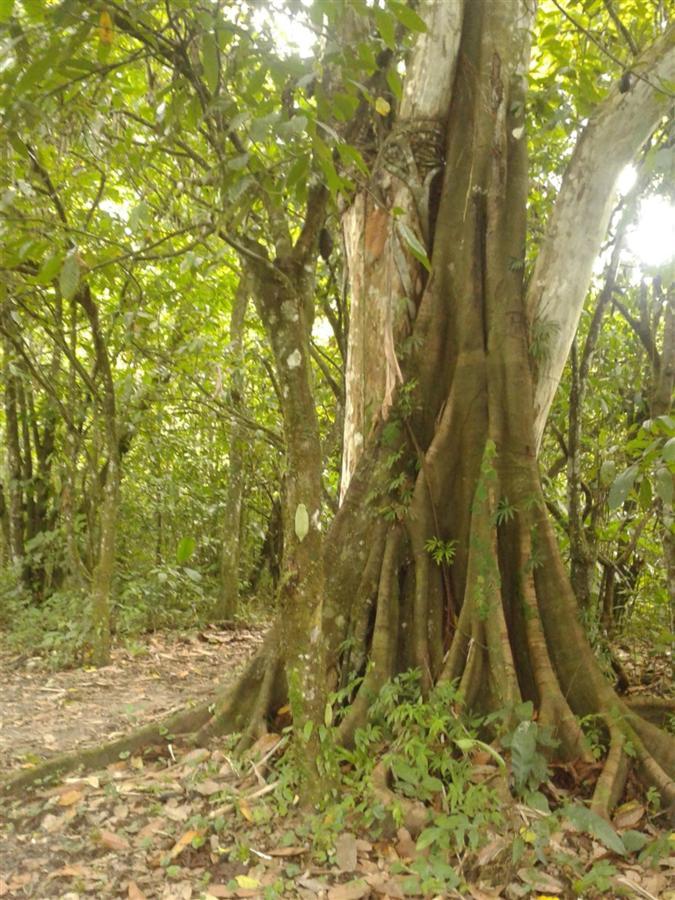 jungle-trips.jpg.1024x0.jpg