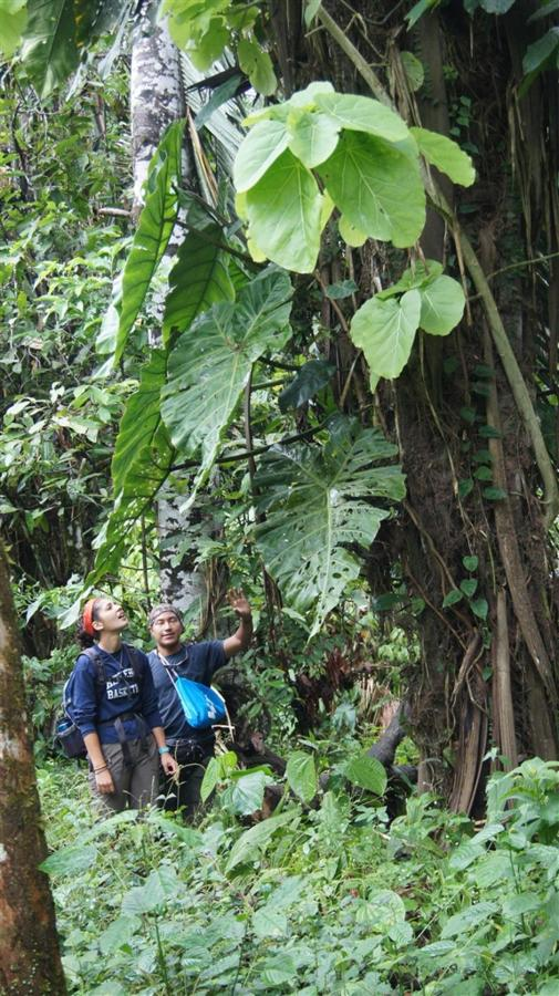 bird-observation-a-medicinal-plants-a-giant-ceibo-tree-a-river-tubbing-a-privat-10.JPG.1024x0.JPG