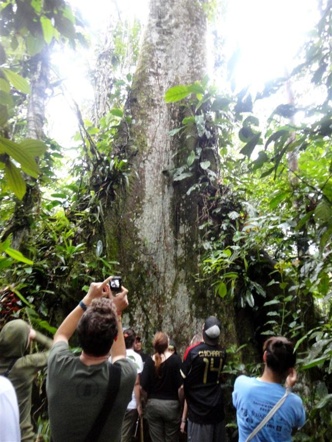 bird-observation-a-medicinal-plants-a-giant-ceibo-tree-a-river-tubbing-a-privat-29.JPG.1024x0.JPG