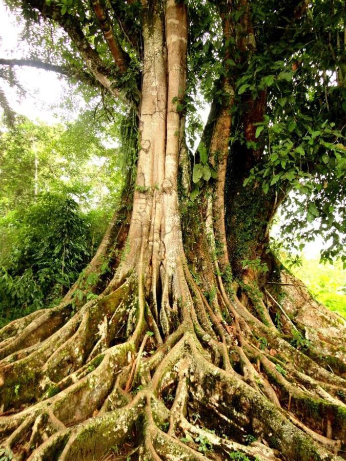 rainforest-jungle-trekking-a-cascade-latas-fine-aroma-of-the-ecuadorian-cacao-converted-in-c-9.JPG.1024x0.JPG