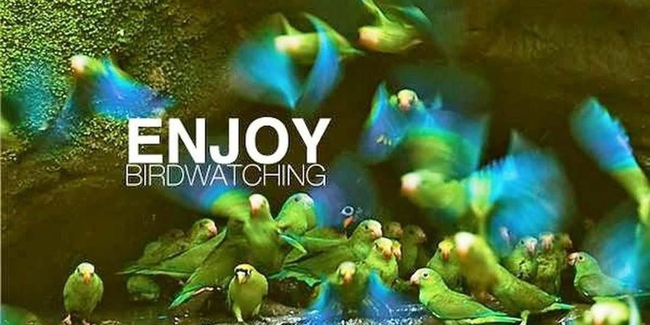 birdwatching-ecuador-quito.jpg