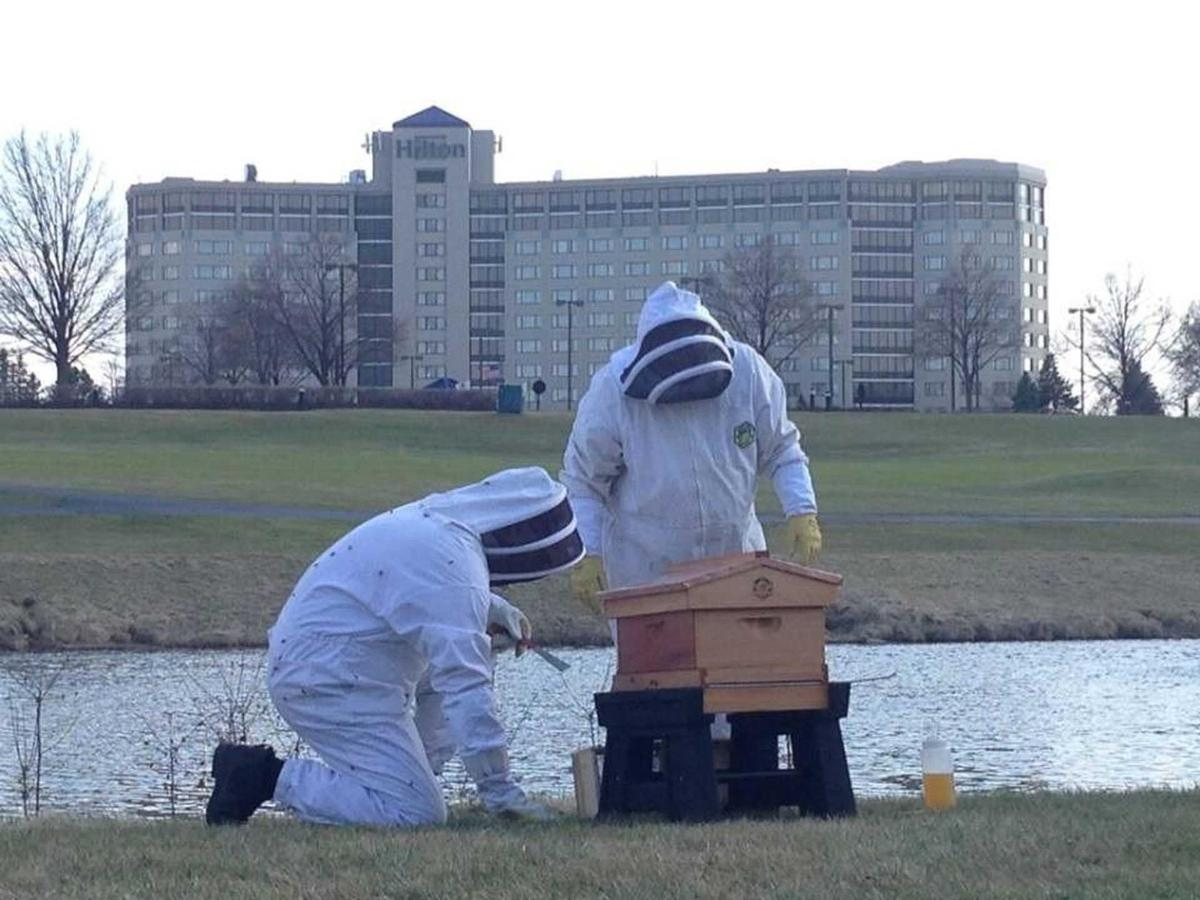 Local Bee Hives