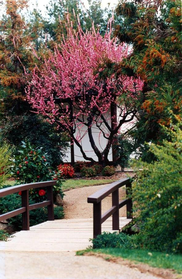 garden2-copy.jpg.1024x0.jpg