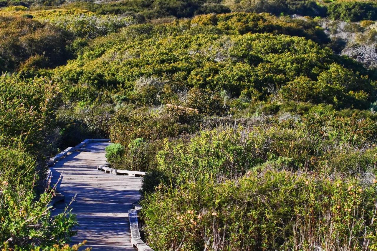 walkway2.jpg.1920x0.jpg