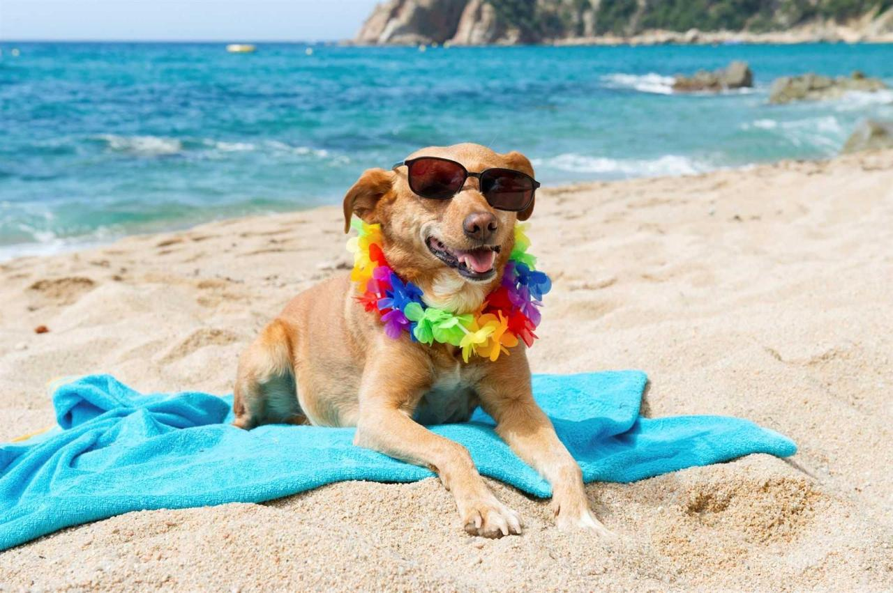 relaxante-dog-at-the-beach.jpg.1920x0.jpg