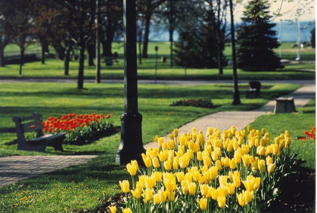 tulips.jpg.1024x0.jpg