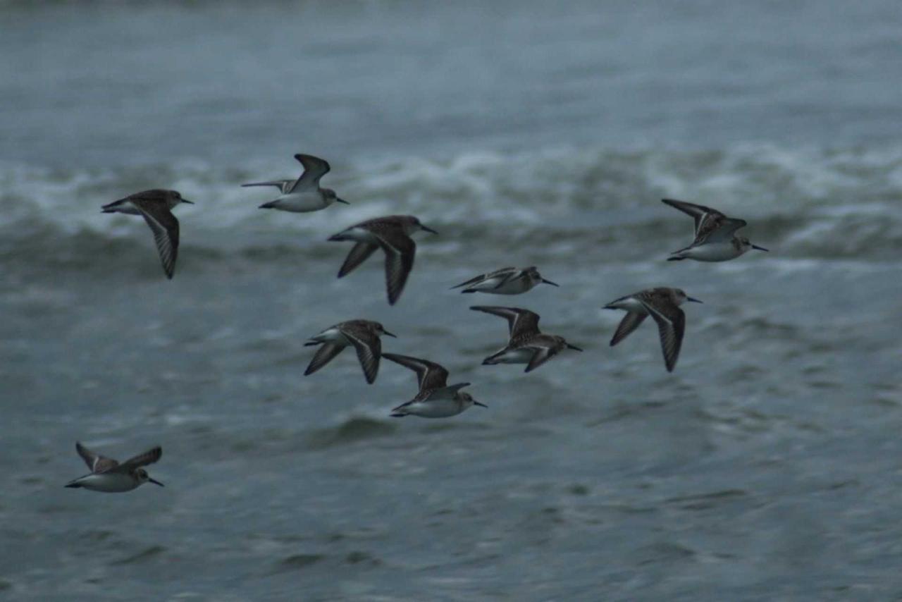 birds2v2.jpg.1920x0.jpg