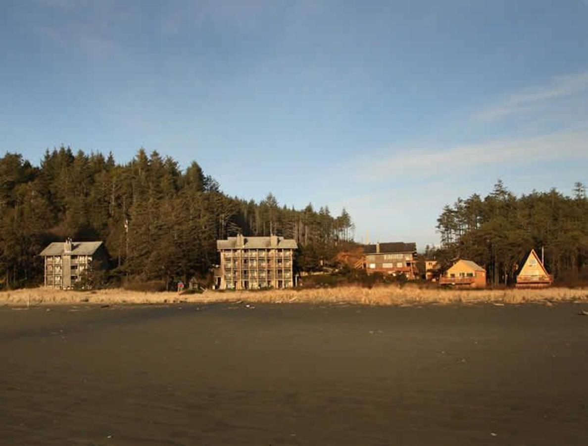 Sandpiper from beach