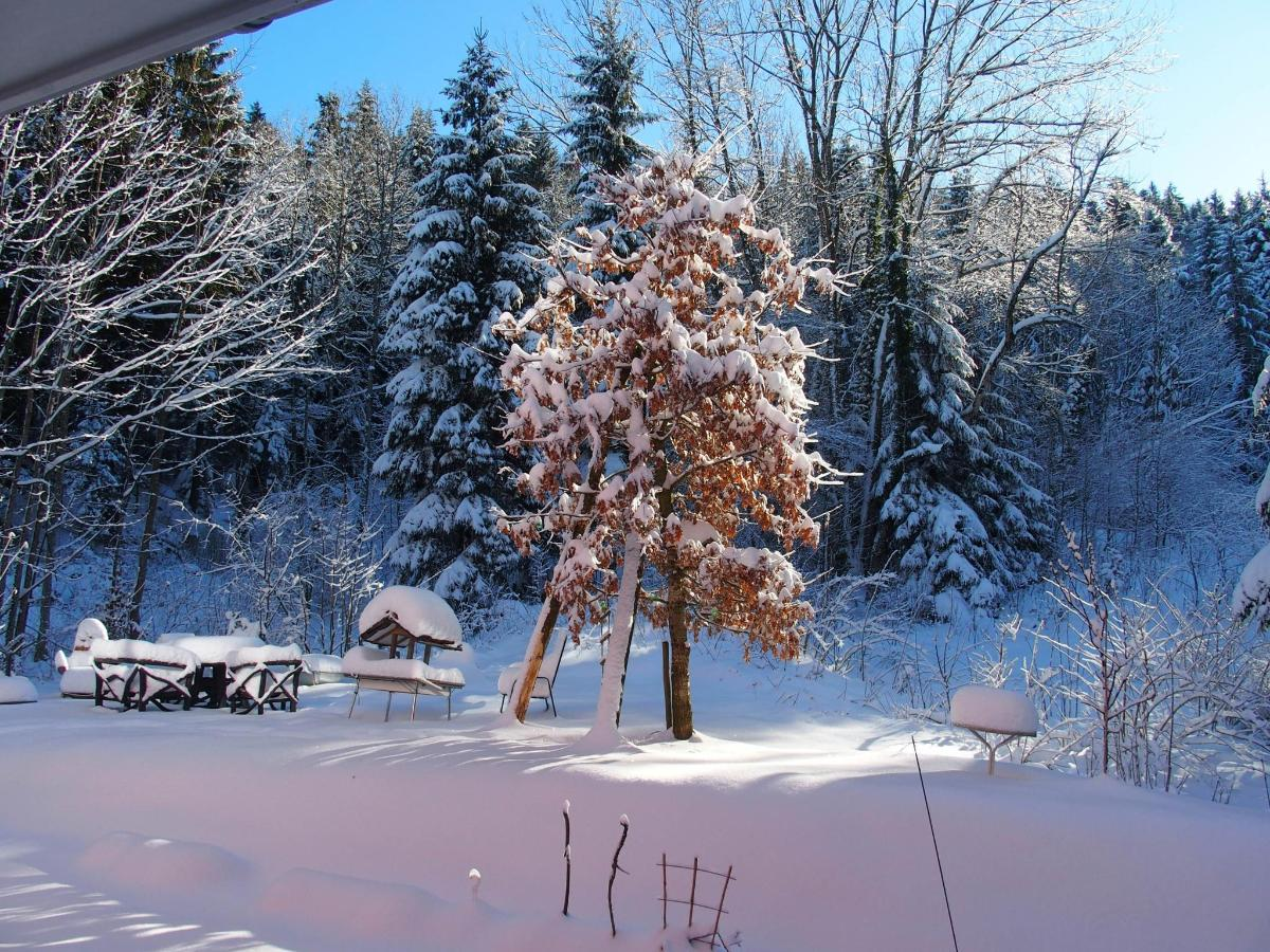 wintertime at our garden and forest