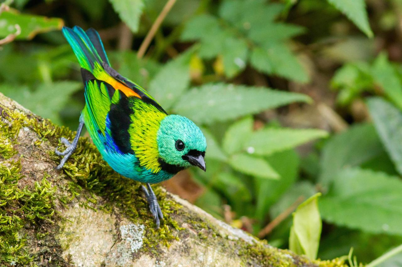 Bird5.jpeg