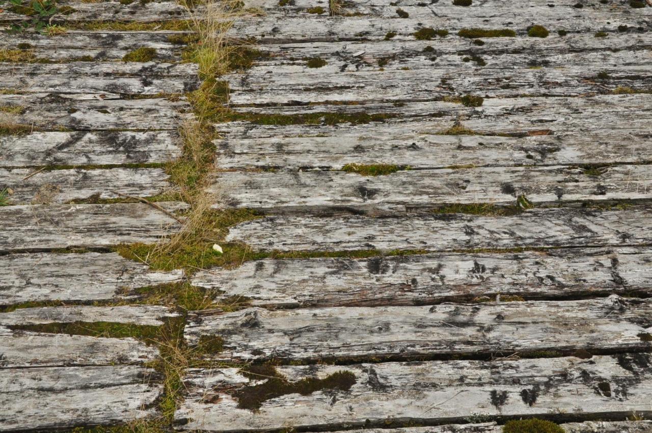 madera de ciprés