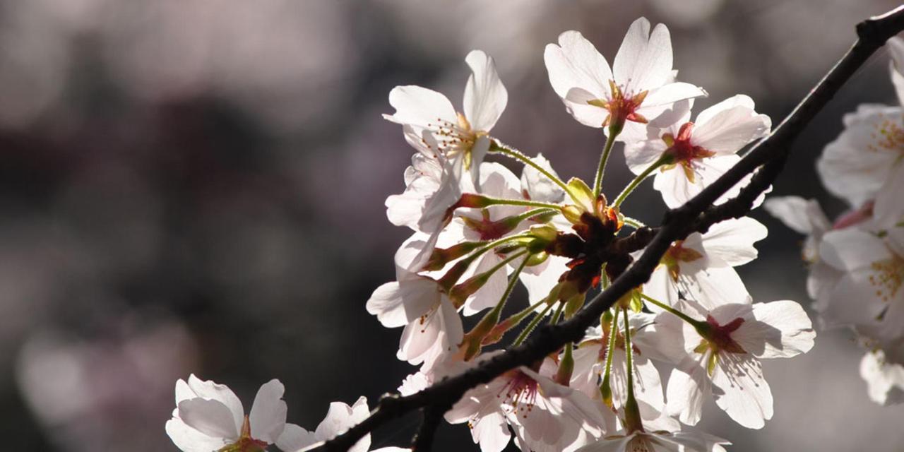 Spring_View (6).jpg