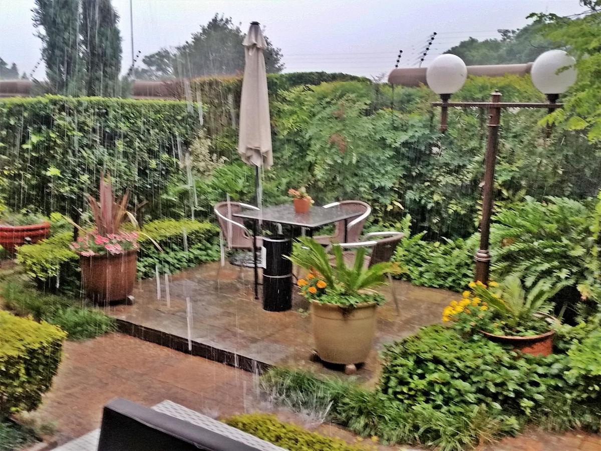 Rain in garden 2  2017.jpg