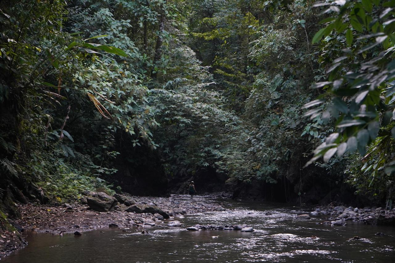 Dschungel Fluss Corcovado Nationalpark
