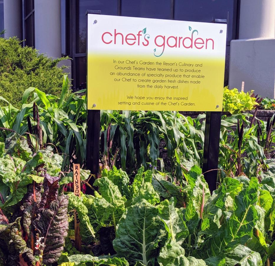 Chefs garden late july 2019.jpg