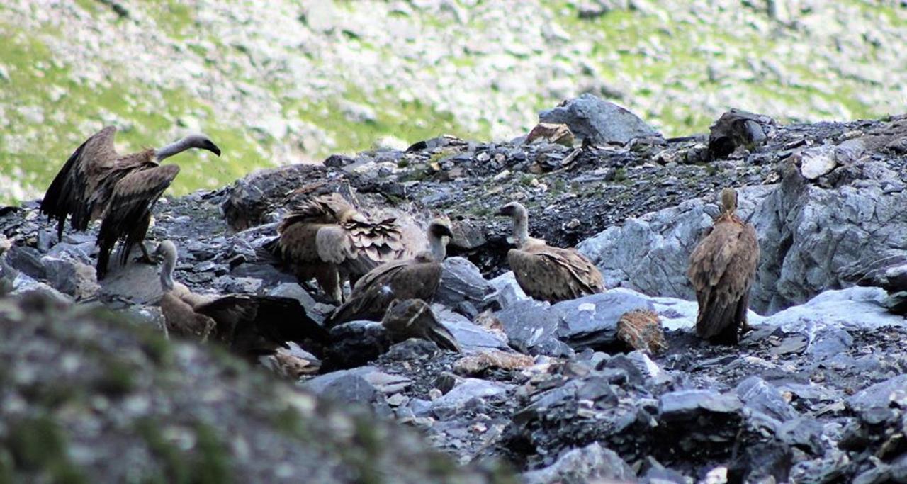 vautours 2 juillet 19.jpg