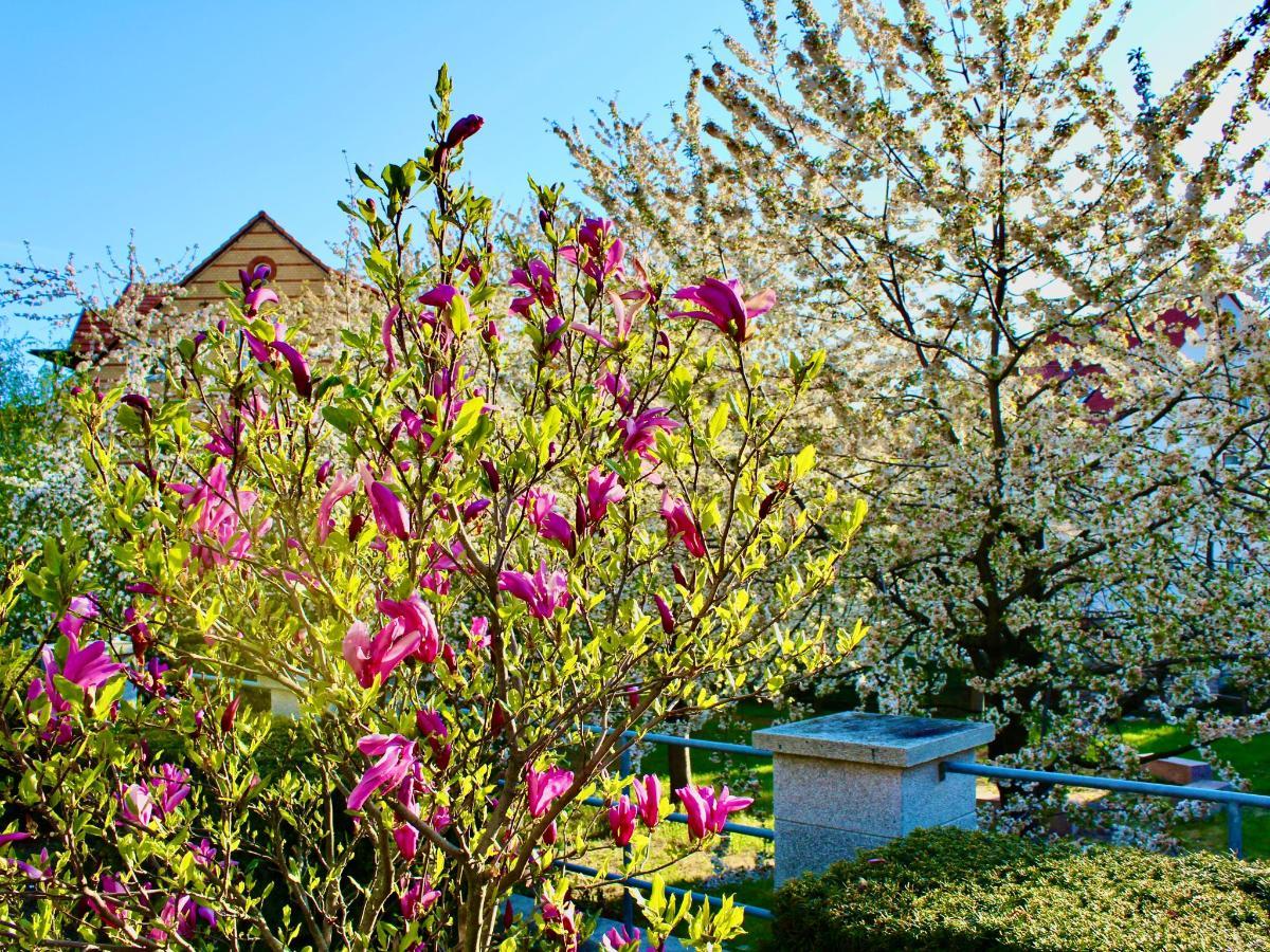 Frühling .jpeg